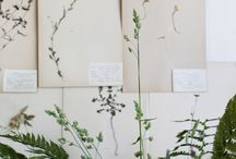 Botanical. / by Josefin Hååg