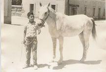 El Moro de Cumpas / Fotos historicas del famoso caballo