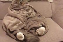 Krazy cat