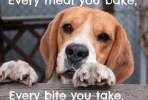 My beagle  / by Jennifer Mary