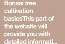 bonsai&plantas