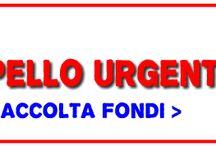 SOS dog / Raccolta di appelli urgenti ed iniziative per la raccolta di fondi per aiutare gli animali