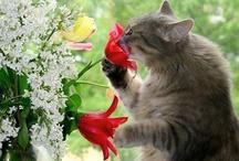 gatos / TODOS OS FELINOS DO MUNDO, AMO TODOS!!!SÃO LINDOS, INDEPENDENTES, ALTIVOS, BRINCALHÕES PORÉM SELETIVOS!!!