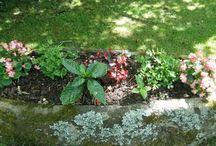 jardin à Fouesnant