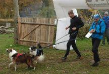 Psy bieganie / Dog trekingi