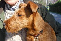 Dog Walking 9 marzo 2014 / Castello di Zucco a Faedis