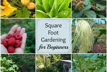 Square Gardening