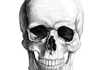Estudo de Anatomia