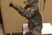 My cat / Funny cat, happy cat