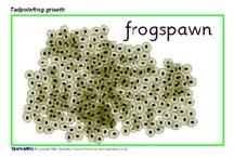 Homeschool Unit Study: Frogs