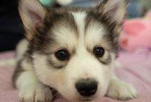 Puppies <3