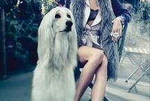 Dog in fashion