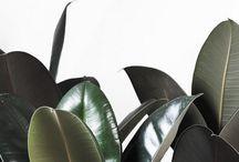 34: Plants