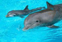 Delfines bebé