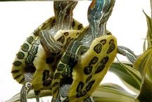 Too Turtely For my Turtle Club / by Sara Lynn