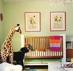 giraffes are taking over