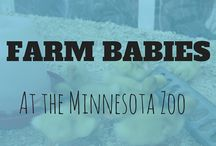 Minnesota for Kids / Minnesota has so many Family friendly destinations. Your kids will love the waterparks, amusement parks, children's museums and camping in on the North Shore. There is never a dull moment.