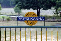 Kanha National Park / Kanha National Park Madhya Pradesh India- Located in the Mandla and Balaghat districts of Madhya Pradesh. Browse here informative articles, videos & photos about Kanha Tiger Reserve.