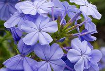 FLORES / Flores=felicidade