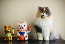 Japan Animals / by Nrtk Skgc