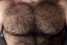 Meus Ursos !!! / Amo Machos Peludos & Tesudos.