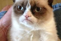 Grumpy Cat  / by RaZella Harding