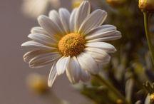 Suculentas e Flores