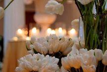 Eliana flores