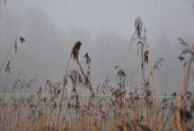 Park in de mist, Almere