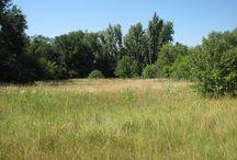 Soroksári Botanikus Kert / Ritka,védett növényfajok az egykori Duna-meder hordalékán:Soroksári Botanikus Kert Budapesten.  #latnivalo #budapest #turabazis  http://www.turabazis.hu/latnivalok_ismerteto_4579