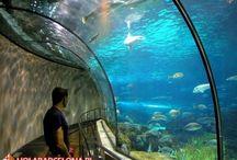 Oceanarium L'Aquarium de Barcelona / Największe oceanarium w Europie. W akwariach o łącznej pojemności 5 000 000 litrów mieszka 11 000 stworzeń z 450 gatunków.