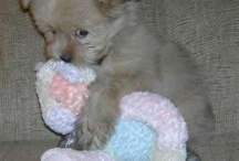 Puppy's awwwwwwwww