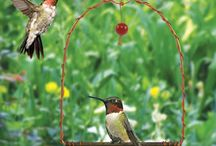 My obsession with hummingbirds / In memory of grandparents / by GB Stegro