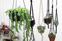 succulent hunging