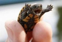 Animals - Frogs, Turtles, etc.