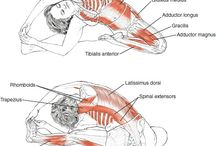 Anatomia Yoga / Paixões