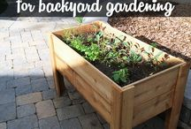 Gardening veggies, herbs, and flowers / by Crystal Carney