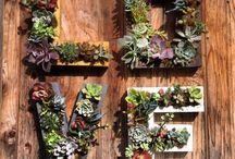 Gardening Will Save The World