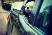 Funny animals / by Colton Kennedy
