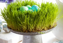 Holidays - Hop for Easter / by Camilla Forsberg