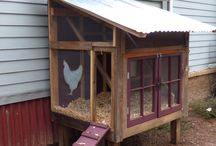 Chicken Coup ideas + more