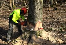 Felling trees / Felling trees up to and over 380mm