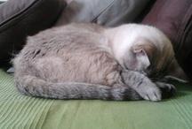 Oh, ¡un lindo gatito!