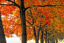 FALL my favorite time of the year