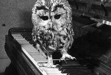 Owls   / by Dóry Tímár