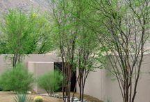 Desert Landscape / by Angela Price