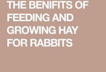 Feeding for bunnies