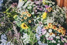 [ Greens ] Wildflowers