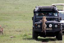 Keşke safariye gitsek...