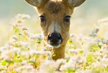 .....oh deer  / ....how beautiful nature can be. Just make me want to smile:-)